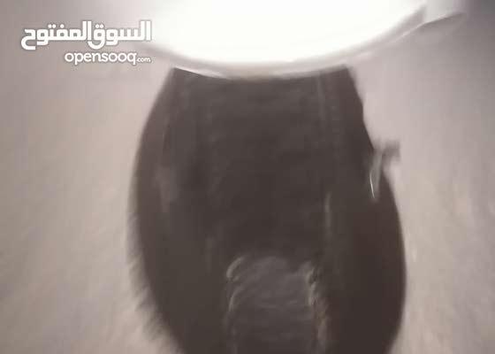 صالح حمد الصيعري
