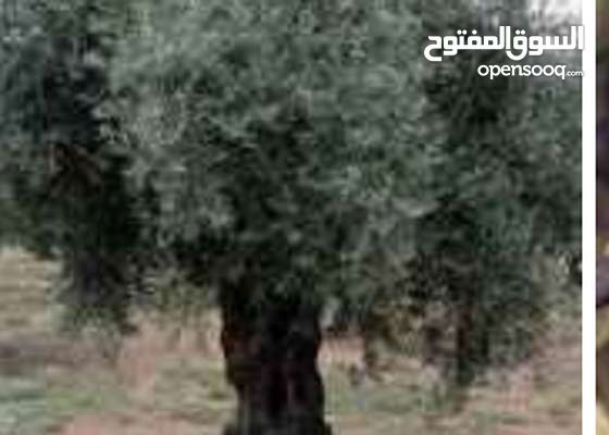 ارض 3 دنوم للبيع دونم ب 10 مليون و 3 دنوم ب 30 مليون سوري  عنوان رنكوس وطا