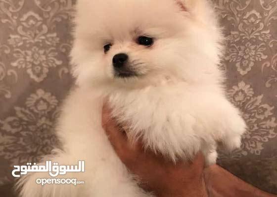 لزبائننا الكرام كلاب موجوده + كلاب مستورده باسعار جدا منافسه