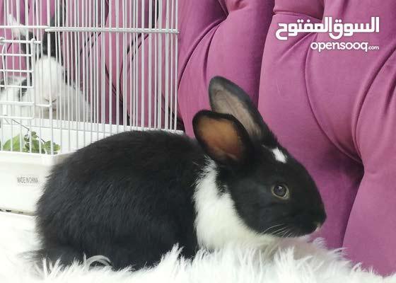 أرانب صغيرة وجميلة