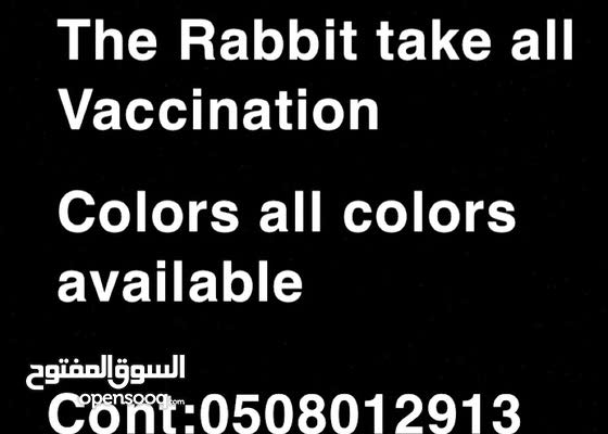 Rabbit for Urgent sale