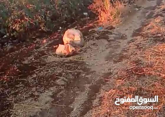 4دونمات و136متر في حرتا منطقة الحبال الارض كف ايد وبالصلاة عنبي