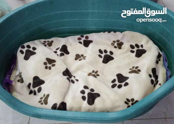 Dog bed for sale.