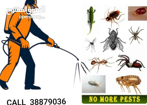 Professional cleaning services and pest control