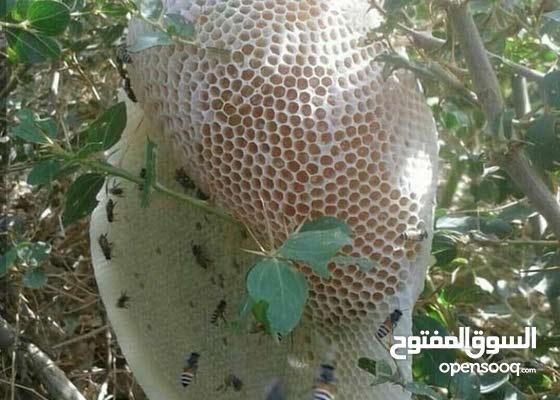 عسل سدر وسمر اماراتي