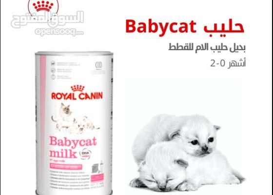 تركيبة بديل حليب الأم للقطط Babycat milk