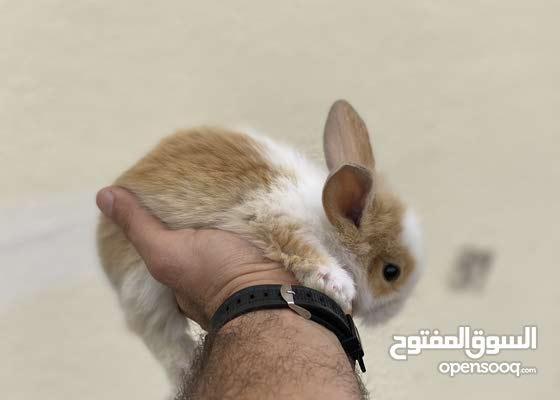 heathy bunnies (ingoora)
