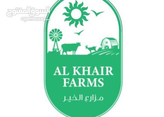 مطلوب عمال مزارع ( خضروات - نخيل )
