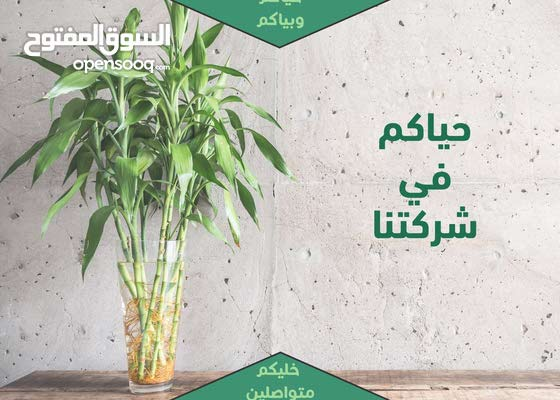 خدمات تنظيف المباني ومكافحة الحشرات