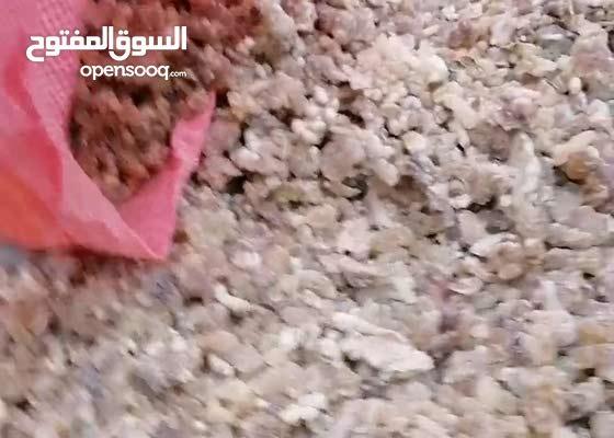 للبيع لبان حوجري من حاسك صلاله ظفار عمان