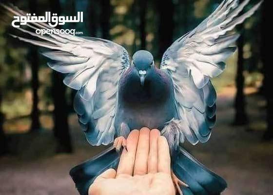 معلم لغة عربية وشرعية و اجتماعيات( ابتدائي - إعدادي - ثانوي - جامعي)