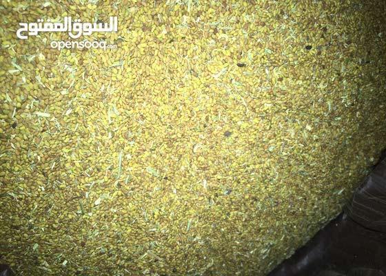 بذر جت عمان اصلي