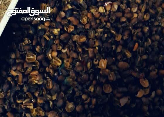 قهوة عربية قهوة قشرر بهارات