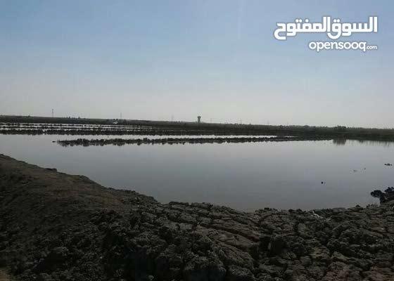 ارض زراعة للاستخدام الزراعي والحيواني والداني جنوب بورسعيد