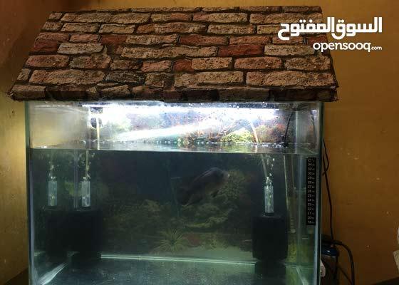 حوض أسماك مع ملحقاته وسمكة فلور