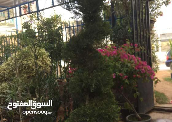 تعشيب وتصميم وتنفيذ الحدائق والاشراف عليها