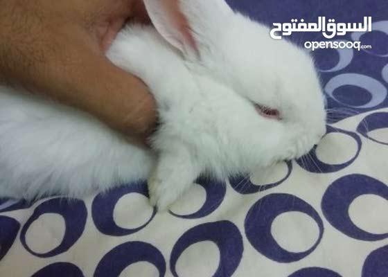 ارنب لطيف