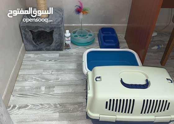 اغراض للقطط
