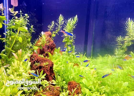 planter aquarium