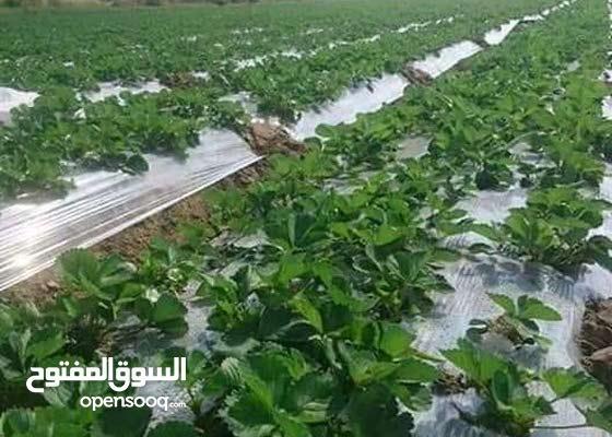 ارض زراعيه للبيع 10 فدان جمعيه زراعيه