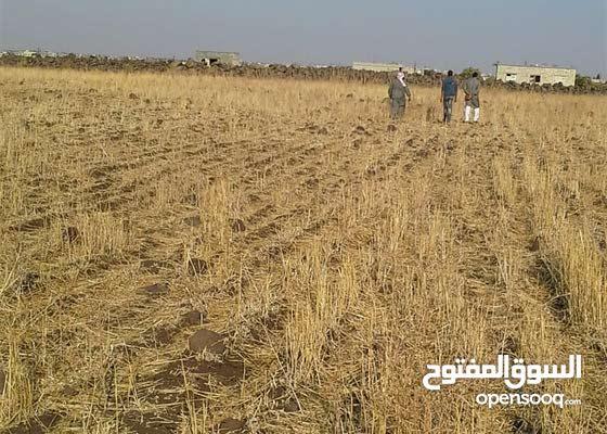 ارض في سوريا للبيع في محافظة حمص_ هبوب الريح