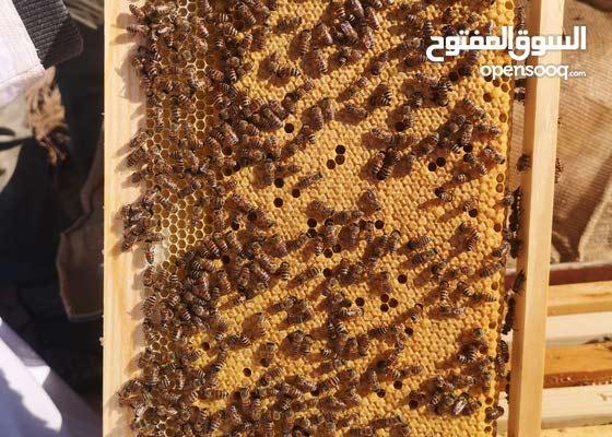 مجموعة النحله العجيبه Home Facebook