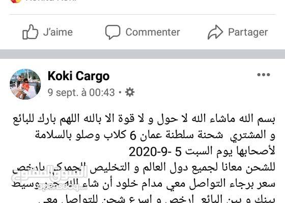 يوجد بيع و شحن الكلاب من مصر لجميع الدول العربية