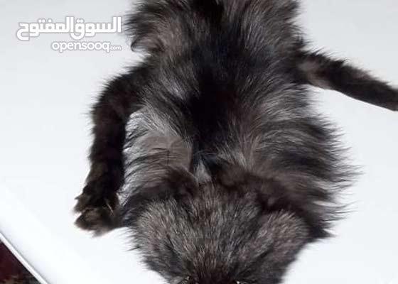 FOX FUR WEAR