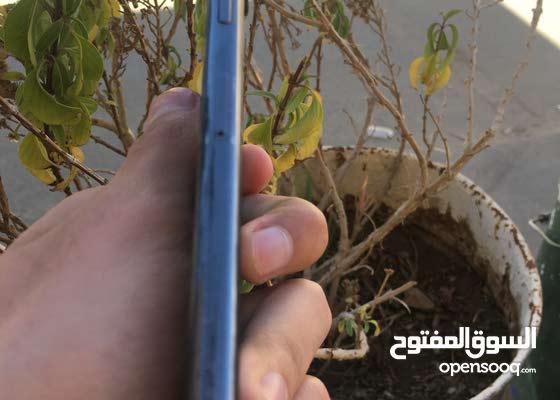 IPhone X أيفون