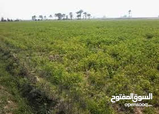 أرض زراعية للبيع في منطقة بنجر السكر