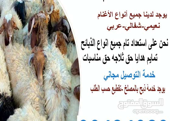 قصاب الكويت/66484029/