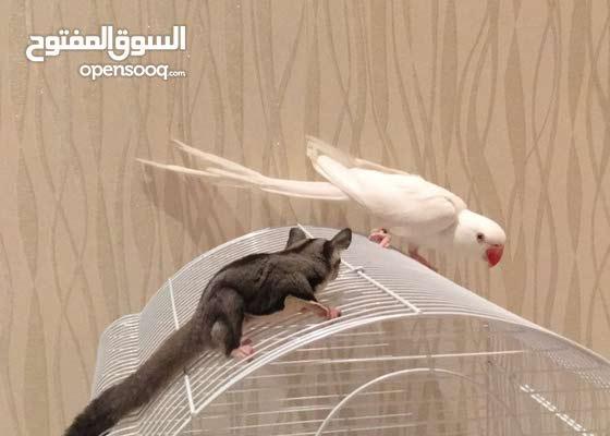 بيع و شراء جميع انواع الحيوانات و الطيور