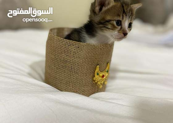 قطط للتبني لعدم التفرغ