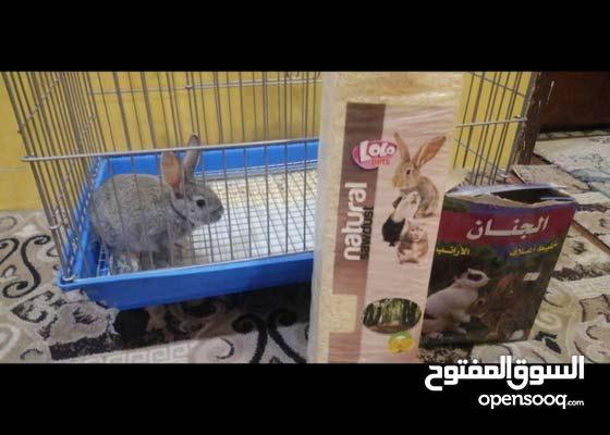 أرنب للبيع ب75