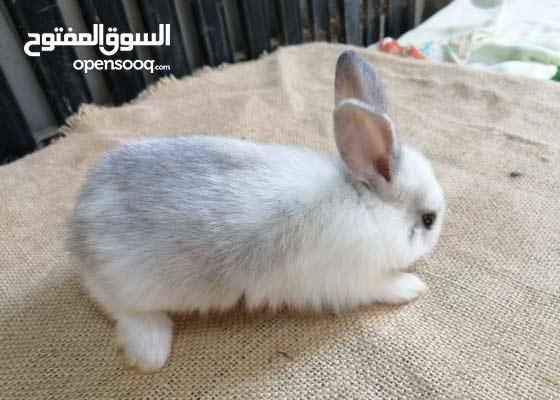 Bunnies for sale
