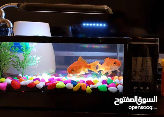 fish with water tank watch alarm and running water