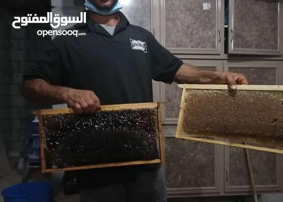 Sortie مجلة كارثي بيع النحل Translucent Network Org