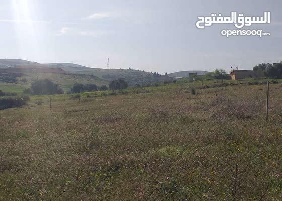 ارض استثمارية في ولاية الشلف