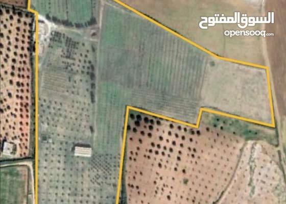 مشروع استثماري على مزرعة فلاحية في تونس (نبحث عن شريك استثماري)