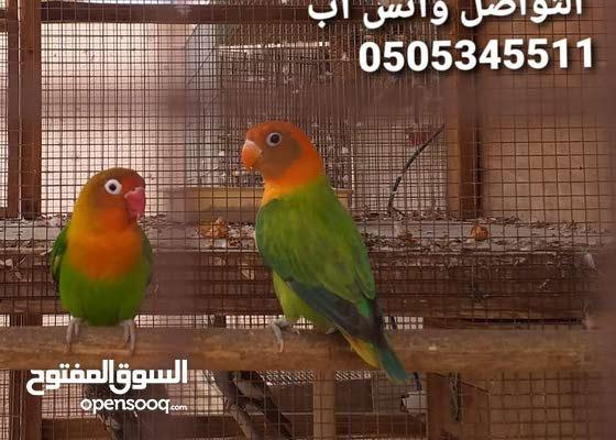 طيور الفيشري