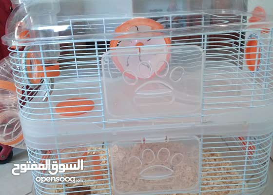 hamster cage 120 AED and hamster is for free its a amazing offer!!!