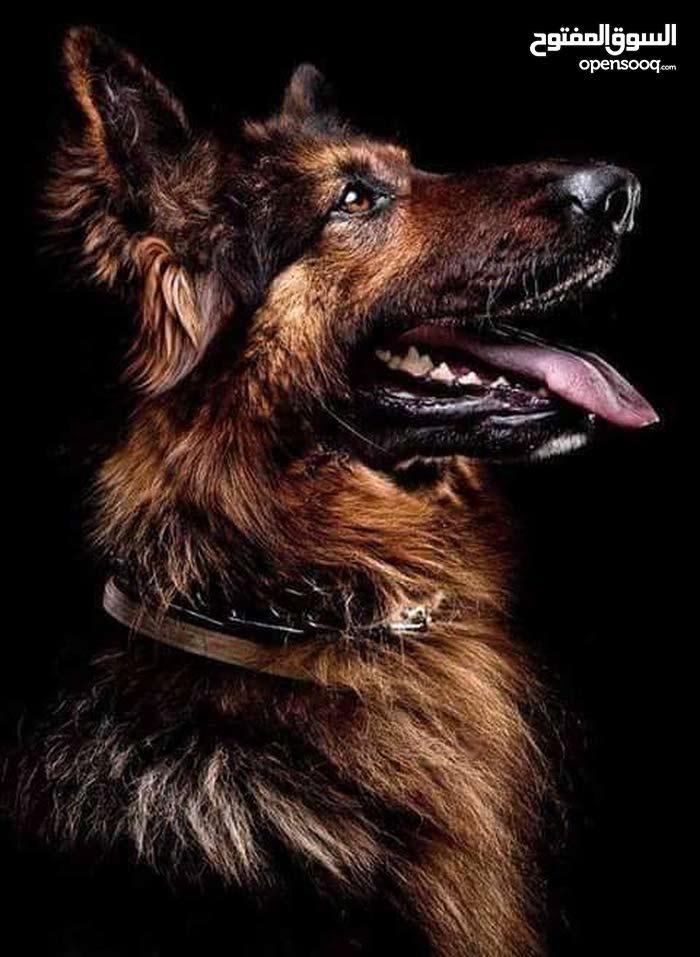 مركز وفندق النور لتدريب الكلاب