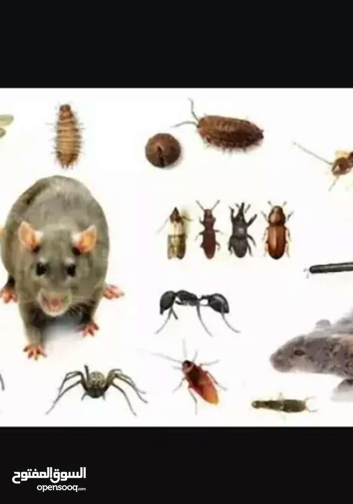 شركه مكافحه الحشرات و الصراصير
