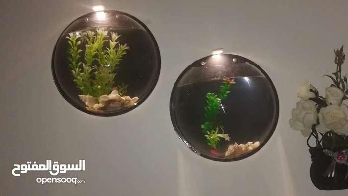 حوض سمك نصف دائرا