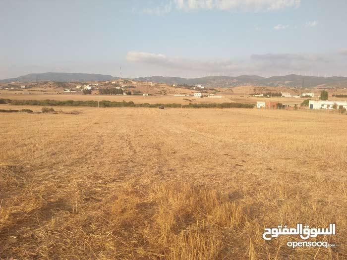 بيع قطعة أرضية بإقليم تطوان تبلغ مساحتها1138 مترا مربعا صالحة للسكن وكذا لإقامة مشاريع
