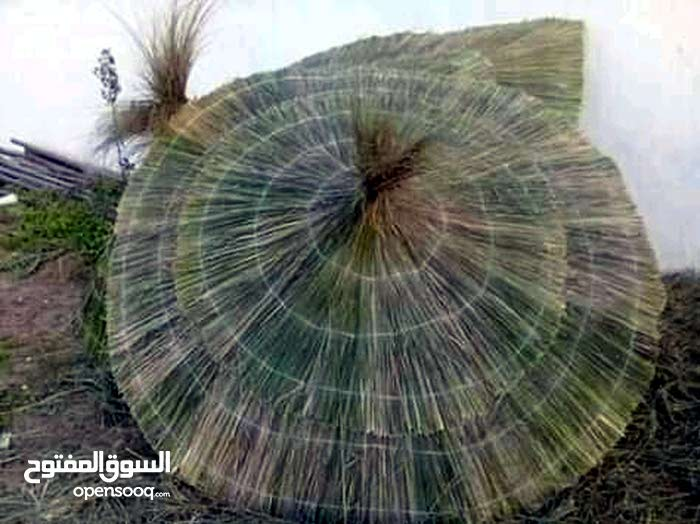 parasol Et baraka