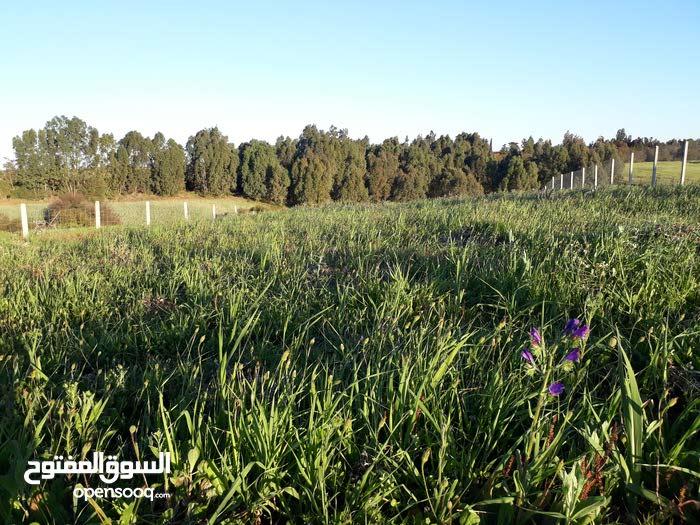 ارض مسيجه مساحتها 1719متر مربع قريبه من سلا الجديده