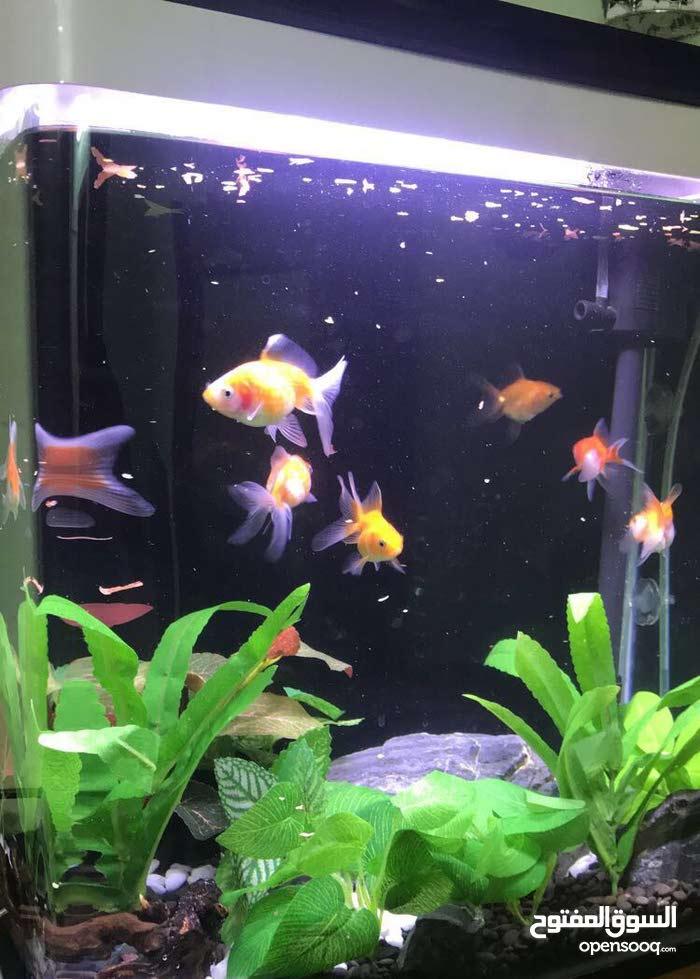 حوض اسماك جاهز فقط ضيف السمك المفضل لديك