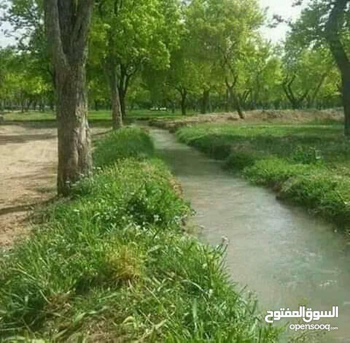 ارض 200 قصبة استراد درعا
