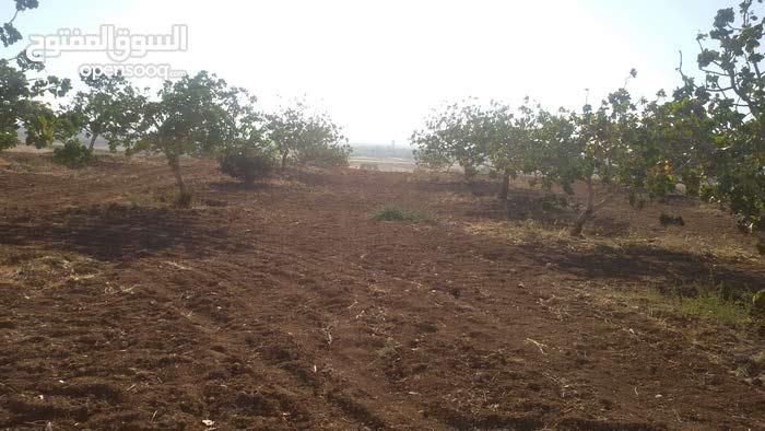 ارض فستق حلبي في حماه معردس
